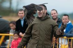 g black sparrowhawk barcelona comprar gavilan negro 02